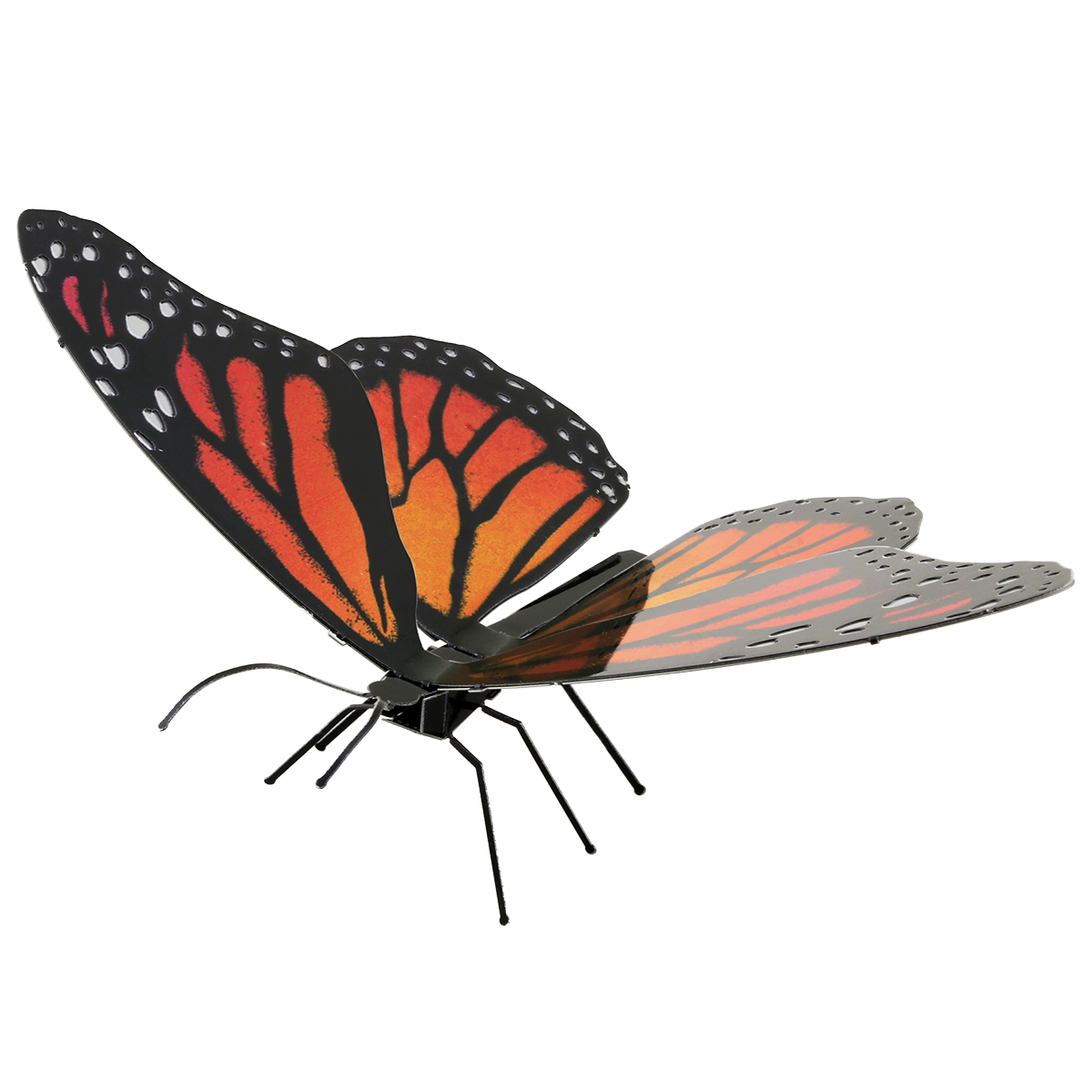 Picture of Monarch butterfly