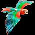 Picture of Premium Series Parrot